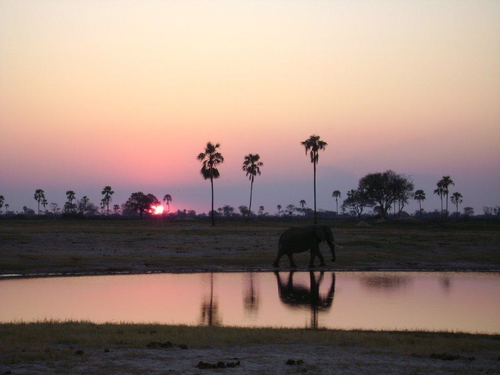 Elephants and Buffalo at the Watering Hole